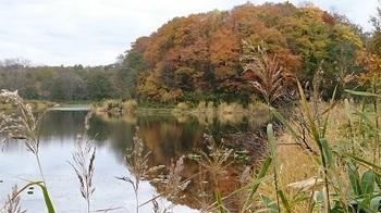 秋は深まる2.JPG